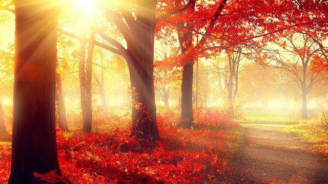 Muziek bij het kerkelijk jaar: Herfst